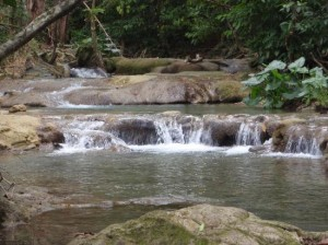 Read more about the article Mayfield Falls Tour, Revitalize your senses at Mayfield Falls.