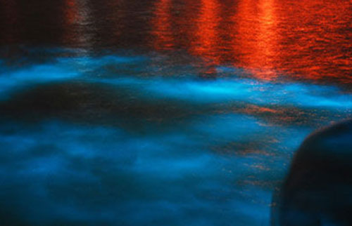 Read more about the article Glistening Waters Luminous Lagoon Tour